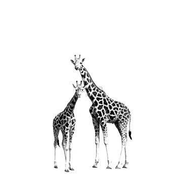 wall mural giraffes black and white