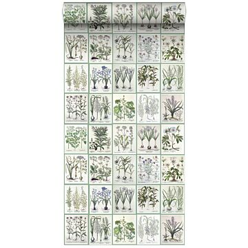 non-woven wallpaper XXL pages of a botanical book light warm gray and green