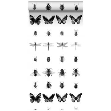 non-woven wallpaper XXL pen drawn insects black and white