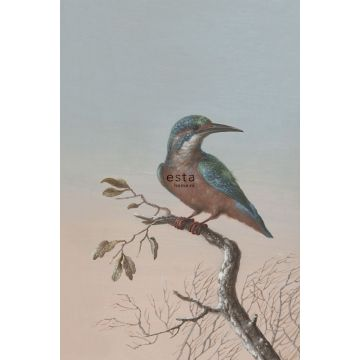 wall mural kingfisher on branch evening red