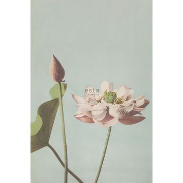 wall mural lotus flower antique pink