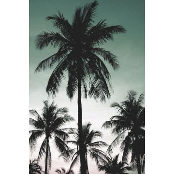 wall mural palm trees petrol green