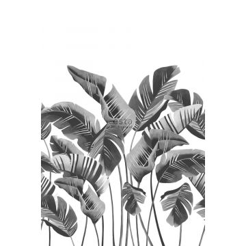 wall mural large banana leaves black and white