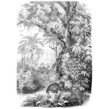 wall mural jungle black and white