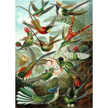 wall mural birds tropical jungle green