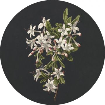 self-adhesive round wall mural blossom light pink and black