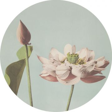 self-adhesive round wall mural lotus flower soft pink and grayed vintage blue