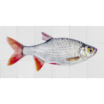 wall sticker Fish gray and red